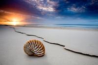 Shelly Beach 11098011169| 写真素材・ストックフォト・画像・イラスト素材|アマナイメージズ