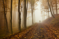 Silhouette of man taking pictures in autumn forest