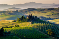 Elevated view of farmhouse at dawn, Val D'orcia, Tuscany, Italy