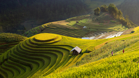 Elevated view of rice terraces, Mu Cang Chai, Vietnam