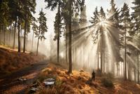 Sun shining through misty coniferous forest