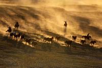 Men herding horses in Mongolia