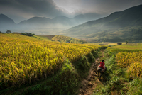 Man riding donkey through terraced fields in Asia