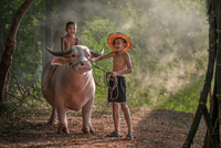 Two boys (6-7) riding on cow