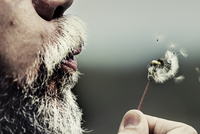 Close-up of man blowing dandelion