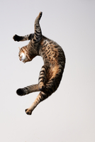 Cat in air