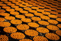 Multitude of fresh oranges