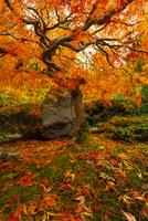 Tree on field in autumn