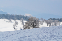 Winter landscape of Todtnau, Germany, Todtnau, Baden-Wurttemberg, Germany