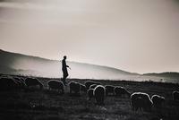 Silhouette of shepherd with lambs, Bursa, Turkey