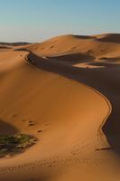 Group of people walking across desert, Merzouga, Morocco