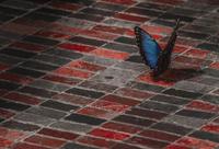 Butterfly sitting on floor, Washington, USA