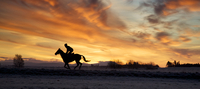 Horse raider under dramatic sky, Curragh, Ireland