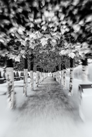 Patch between trees at black white photography
