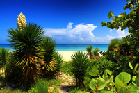 Lush exotic flora on beach, Varadero, Matanzas, Cuba