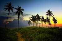 Silhouettes of palm trees against sky at dawn, Guanabo, Ciudad De La Habana, Cuba
