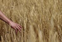 Arm reaching for grain