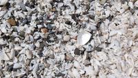 Shells and pebbles form Lake Erie, USA 11098019356| 写真素材・ストックフォト・画像・イラスト素材|アマナイメージズ