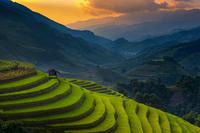 Terraced field at sunset, Mu Cang Chai, Vietnam