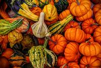 Full frame of colorful pumpkins