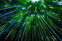Low angle view of bamboo forest, Daehan Dawon, Boseong, South Korea