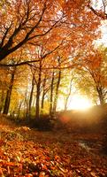 Golden trees in autumn