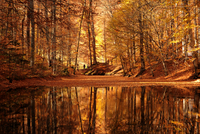 Forest reflecting in bay, Bolu, Turkey