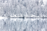 Winter forest reflecting in lake, Tyrol, Italy