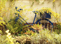 Blue bike overgrown with plants, leaning against building