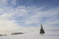 Tree in snow, Biei, Hokkaido, Japan