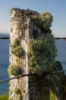 Lichen on wooden post, Melvaig, Scotland, UK