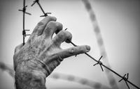 Hand touching barbed wire, Breendok, Belgium