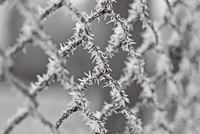 Close-up of chainlink fence covered with frost, Ivano-Frankivsk, Ukraine