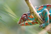 Close-up of chameleon, Zurich, Switzerland