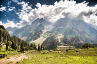 Green meadow with mountains in background under cloudy sky, Sonamarg, Srinagar, Kashmir, India