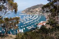 Boats Moored in Avalon Bay Harbor at day, Santa Catalina Island, California