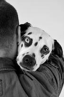 Man hugging dalmatian, Germany