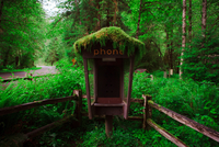 Telephone booth in the forest
