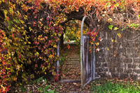 Open door with lush leaves overgrowing wall
