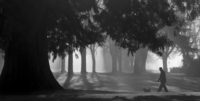 Man walking with dog in park on foggy day, Vancouver, British Columbia, Canada