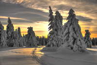Sunset behind snow covered coniferous trees, Champ du Feu, Alsace, France