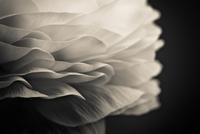 Close-up of flower petals, Warsaw, Poland