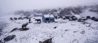 Chinese nomad camp with livestock in winter, Kangding, Sichuan, China