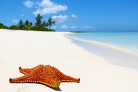 Starfish lying on beach, Cayo Ensenachos, Cuba