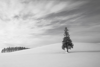 Snowy landscape with one tree and forest in background, Biei, Hokkaido, Japan