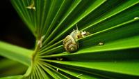 Snail on leaf 11098034582| 写真素材・ストックフォト・画像・イラスト素材|アマナイメージズ