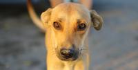 Close up portrait of cute dog