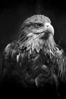 Portrait of eagle, Warsaw, Poland
