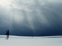 Minimalistic winter landscape, Biei, Hokkaido, Japan