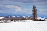 Winter landscape, Biei, Hokkaido, Japan